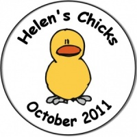 Hen night party personalised badge single yellow chick